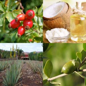 Oli vegetali & Aloe vera
